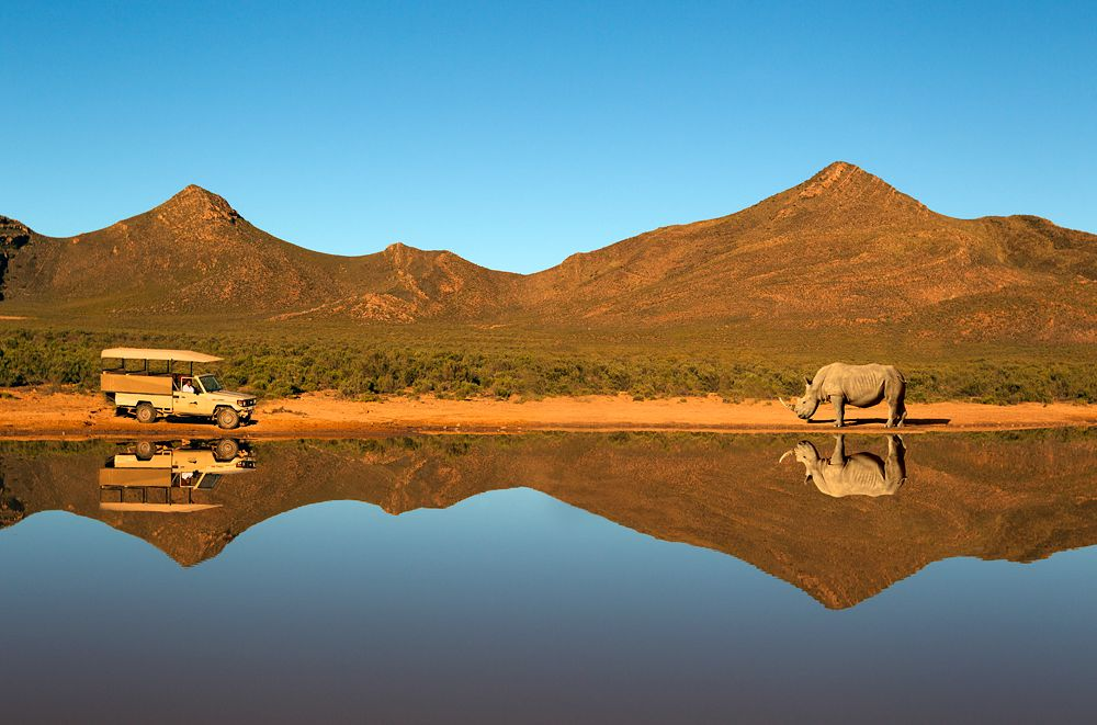 Aquila Game Reserve & Spa Afternoon Safari