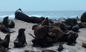Seals on Seal Island in Cape Town
