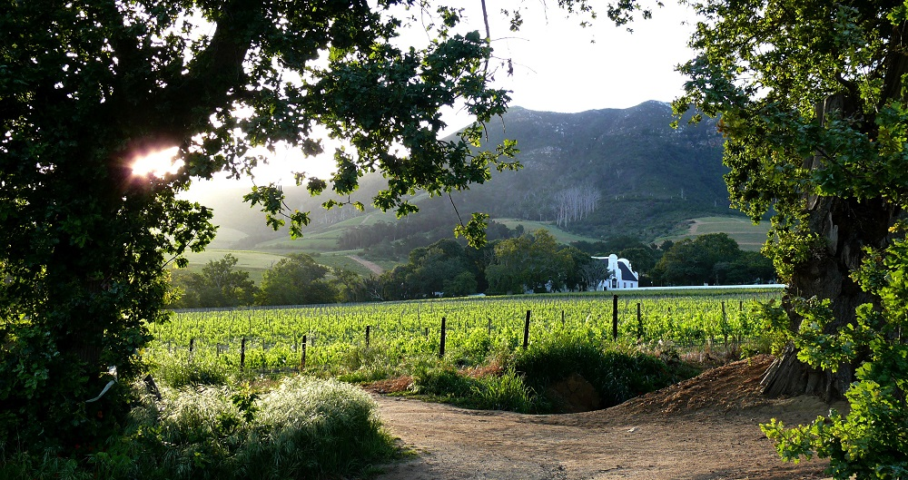 Views from Groot Constantia in Cape Town