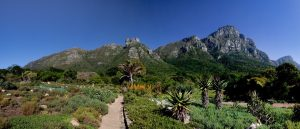 Mountains surrounding Kirstenbosch Botanical Garden in Cape Town South Africa