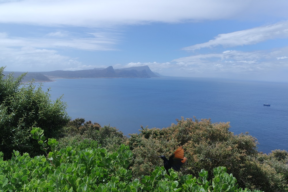 False Bay seen from Cape Point
