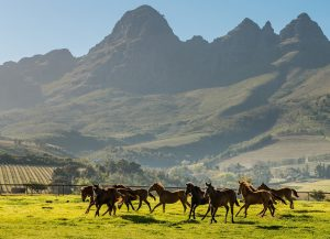 Wildlife Race horses Cape Winelands