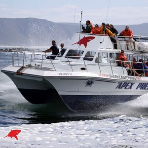 Great White Shark Tours
