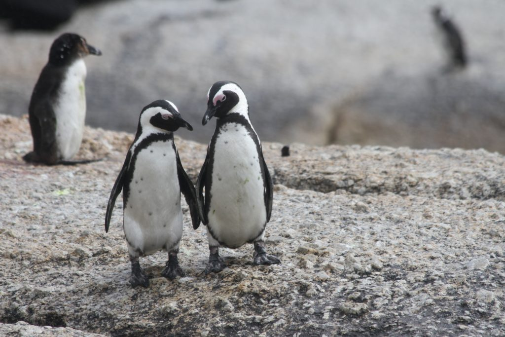 city-pass-penguin-attraction